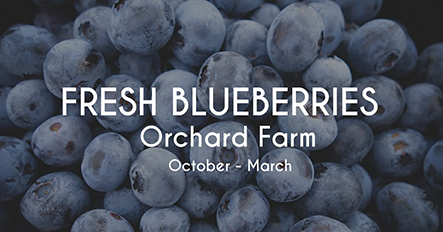 Blueberries Picking Template