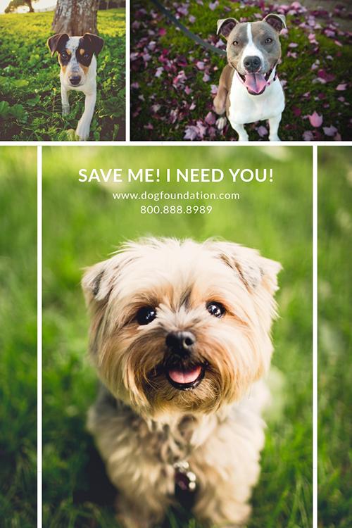 Dog Foundation Template