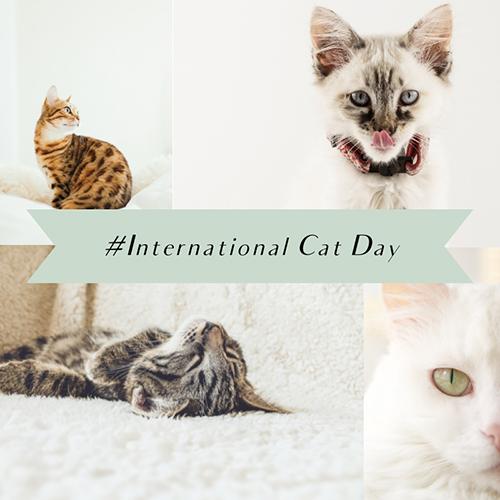 International Cat Day Blog Graphic Medium Template