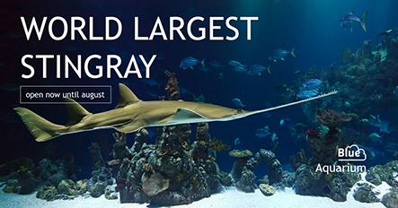 Aquarium - Facebook Ad Template