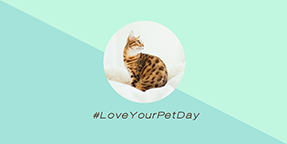 Love Your Pet Day Twitter Post Template