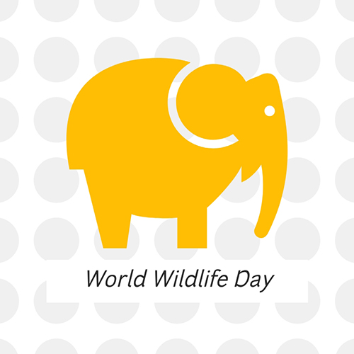 World Wildlife Day Blog Graphic Medium Template