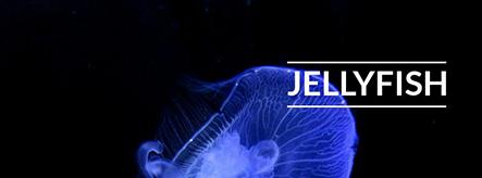 Jellyfish Template