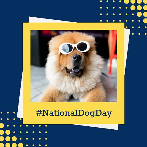 National Dog Day Blog Graphic Medium Template