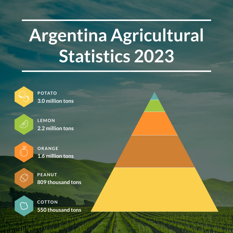 Agricultural Statistics - Pyramid Chart Square Template
