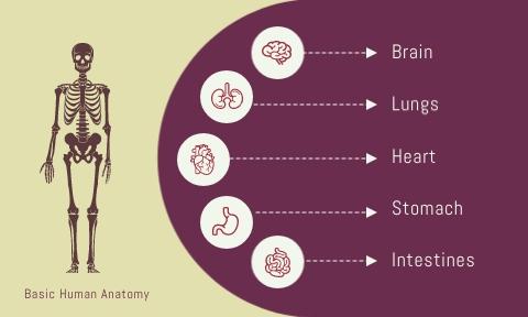 Anatomy Flashcard Template