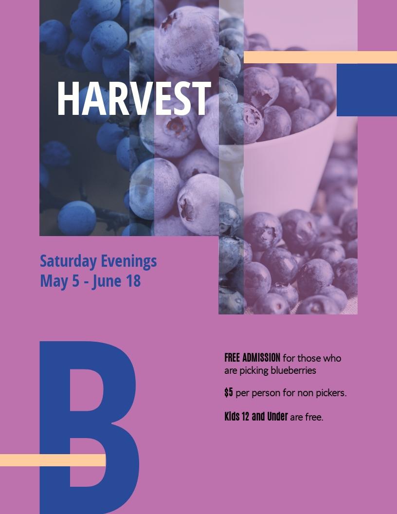 Blueberries - Flyer Template