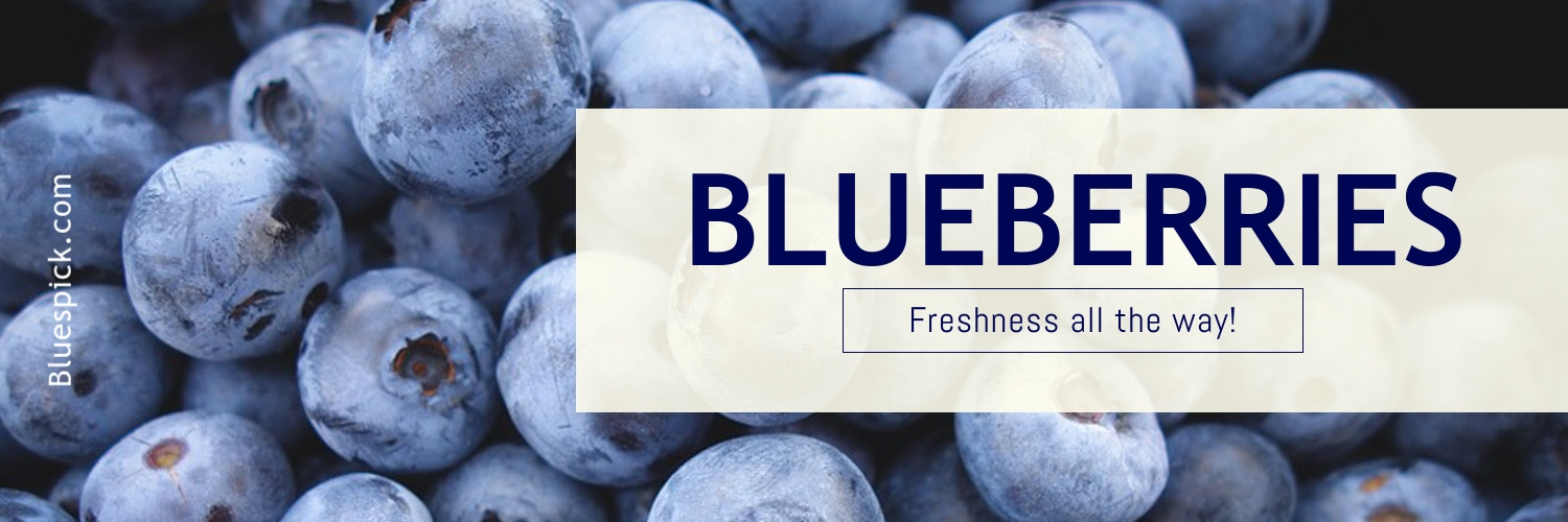 Blueberries Template