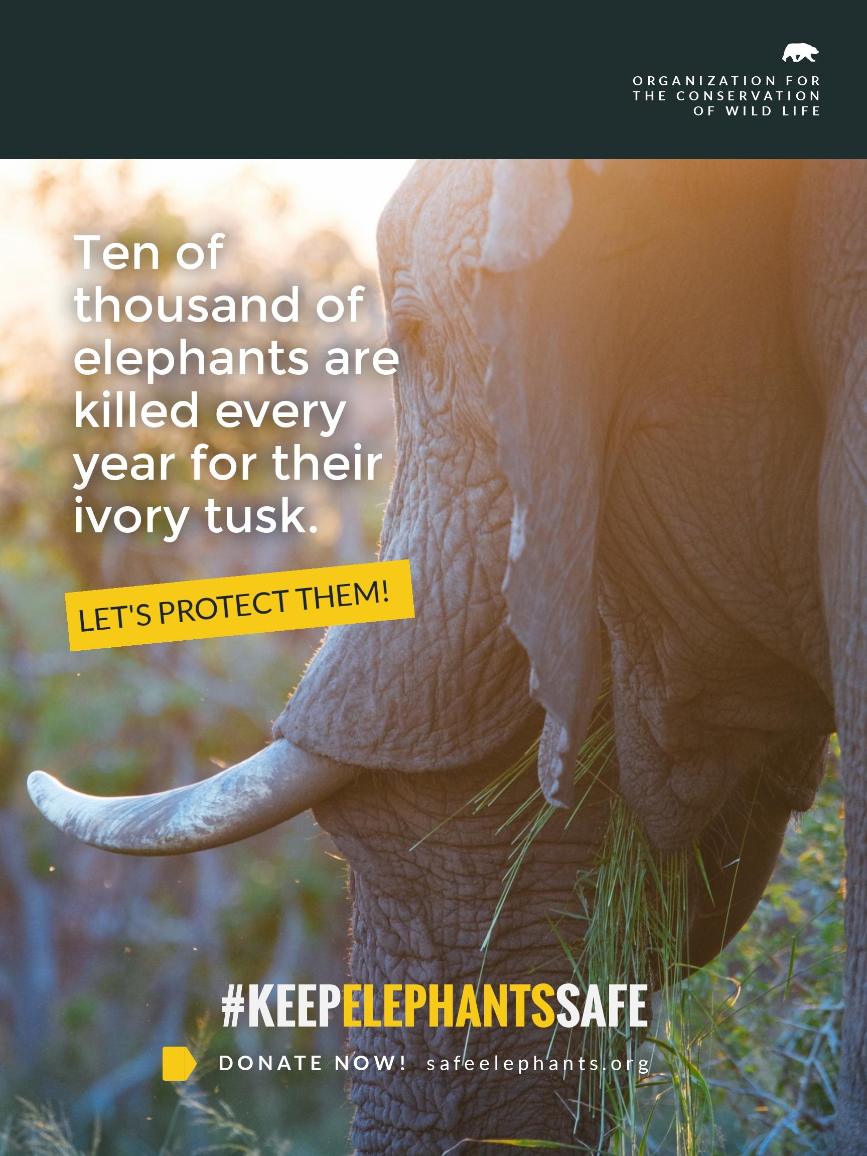 Elephants Poster Template