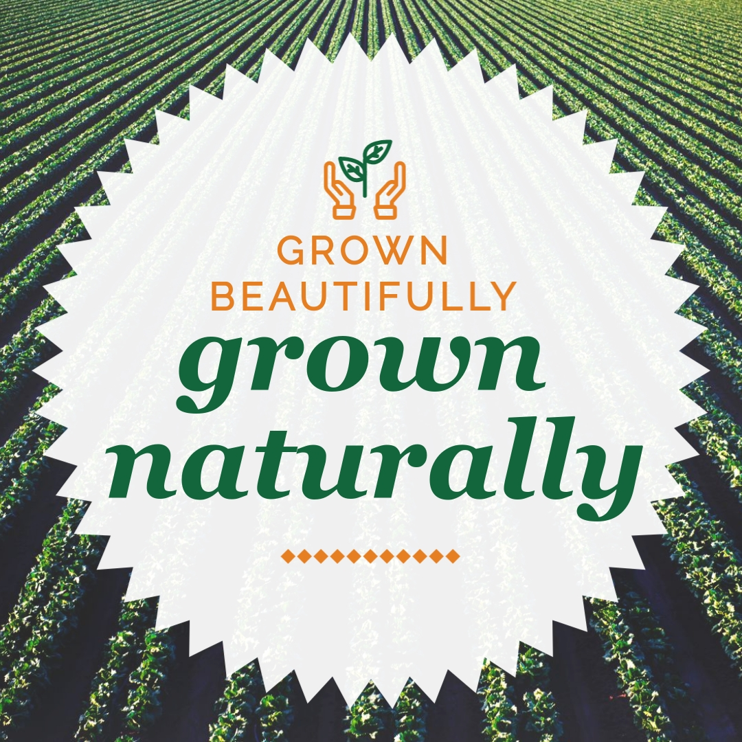 Grown Naturally - Instagram Post Template