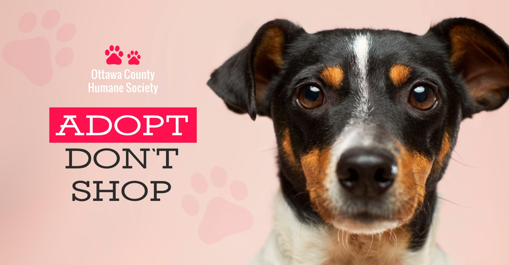 Humane Society Facebook Group Cover Template
