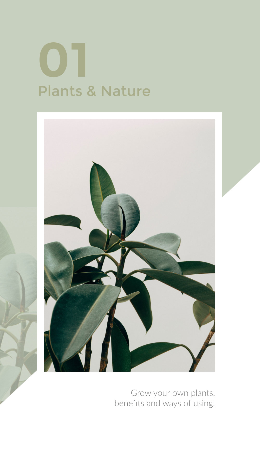 nature instagram stories template