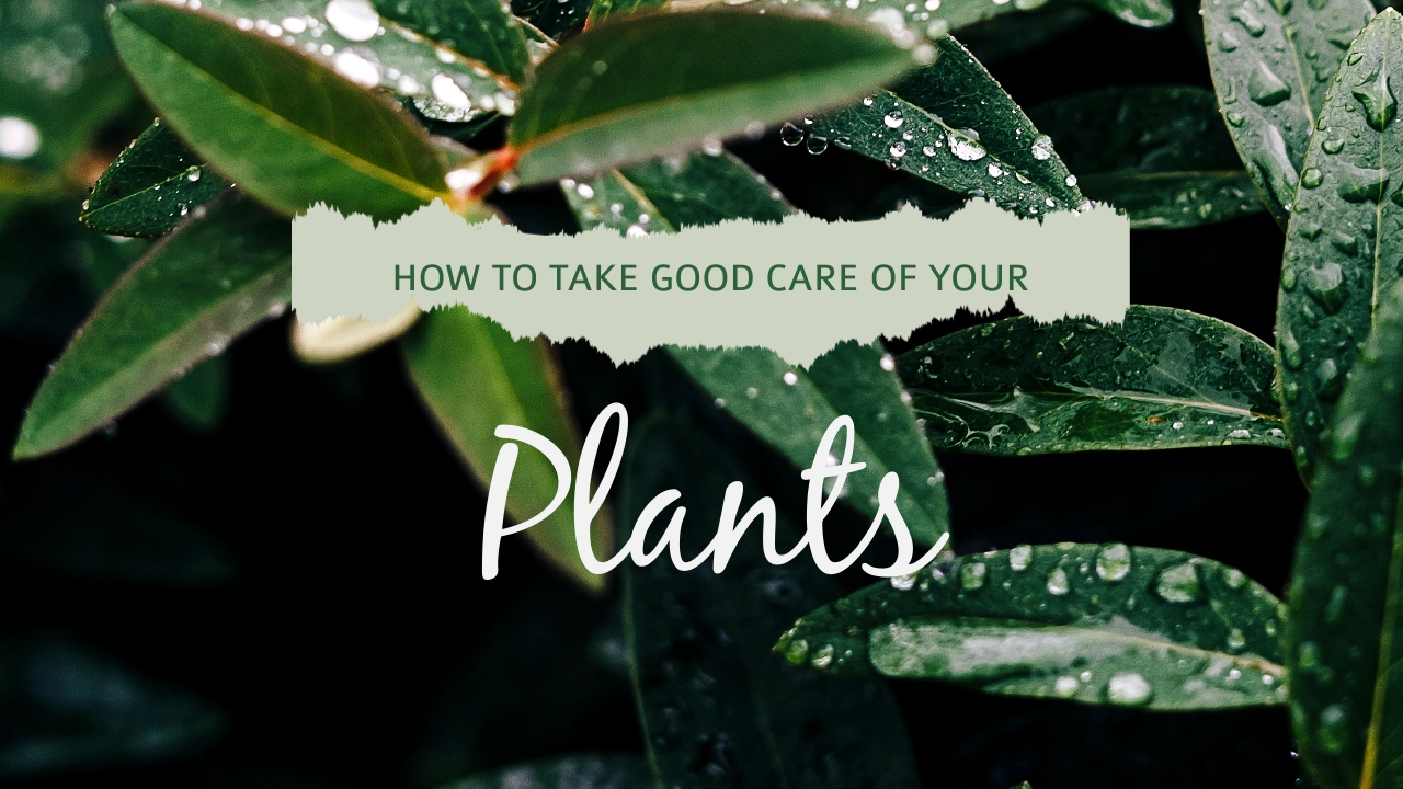 Plants Youtube Video Cover Template