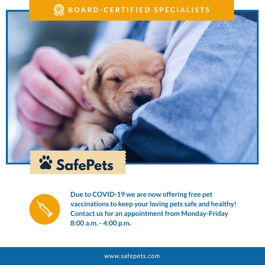 Safe Pets Animated Square Template