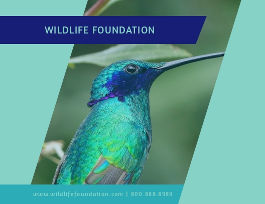 Wildlife Foundation - Postcard Template