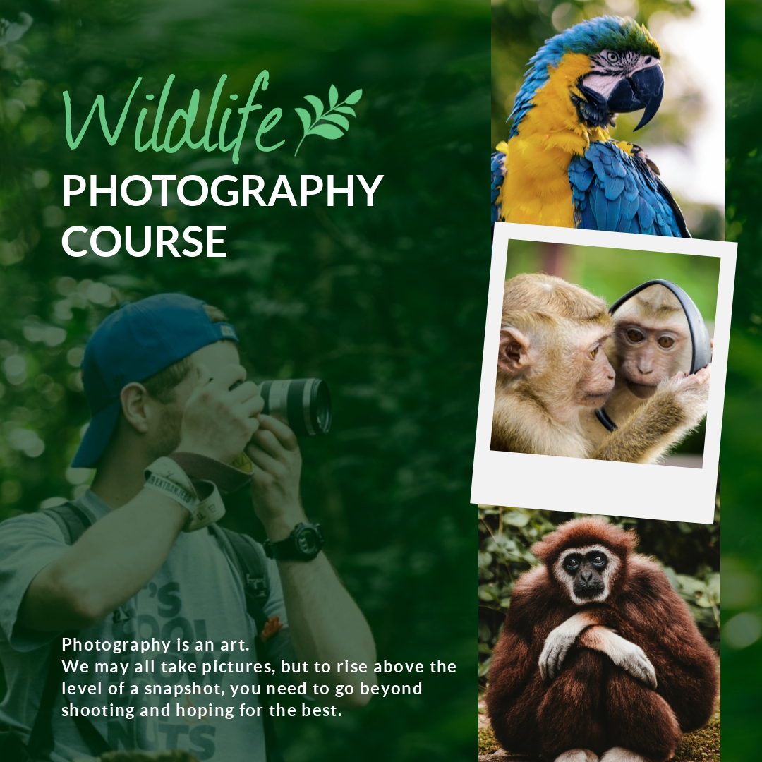 Wildlife Photography Collage - Instagram Post Template