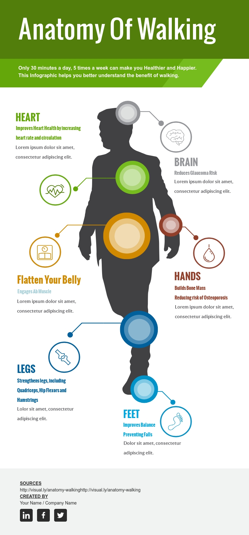Anatomy of Walking - Infographic Template
