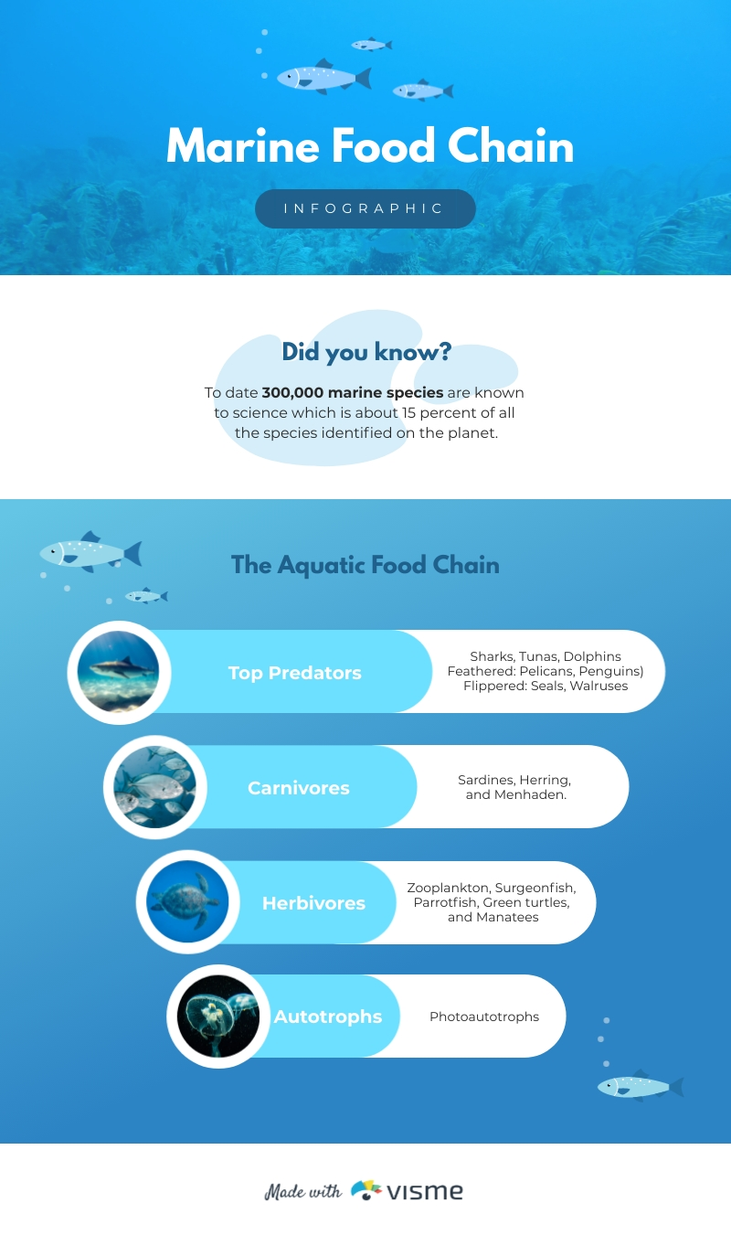 Marine Food Chain Hierarchy - Infographic Template