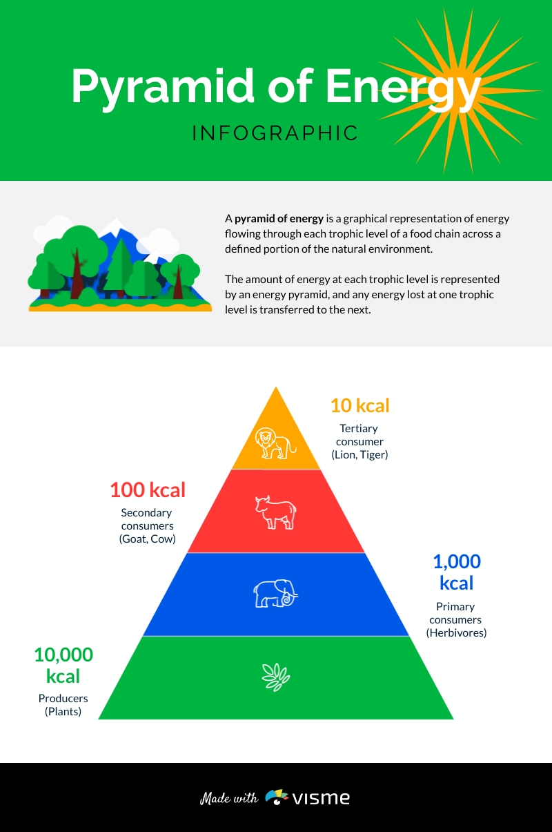 Pyramid of Energy Infographic Template