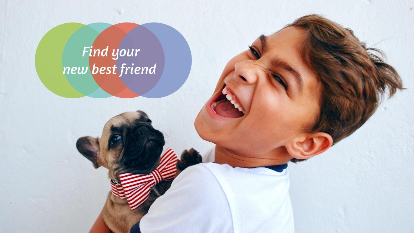 Pet Adoption Slideshow Template